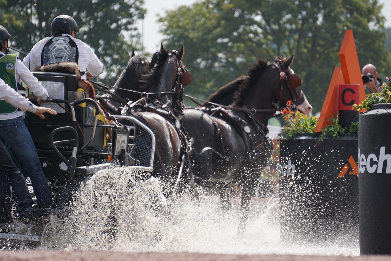 Photographie prise par Horse Development lors d'une compétition d'attelage internationale, meneur et son attelage à quatre chevaux franchissant un obstacle type gué