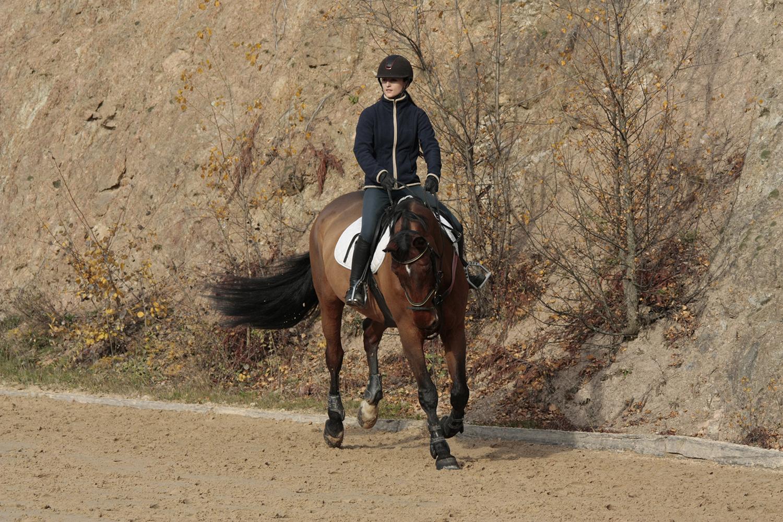 Photographie prise par Horse Development lors d'un stage d'entraînement pour cavaliers de saut d'obstacles, jument et sa cavalière au galop