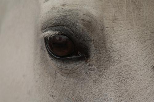 Photographie prise par Horse Development, oeil d'un cheval ou d'un poney au repos. Vous aider dans votre projet de création d'entreprise.