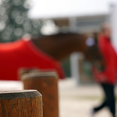 Cheval au pas, tenu en main par un groom, prêt pour une présentation d'élevage et d'étalons,Etalon présenté lors d'une compétition d'élevage à Chazey-sur-Ain, photographie prise par Horse Development, agence de communication de la filière cheval