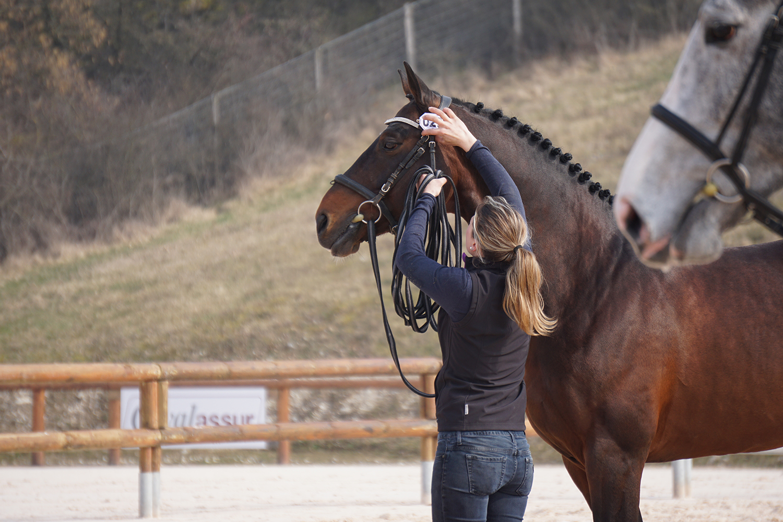 Photographie prise par Horse Development lors d'un rassemblement d'élevage, présentation d'un étalon de sport, CSO Dressage