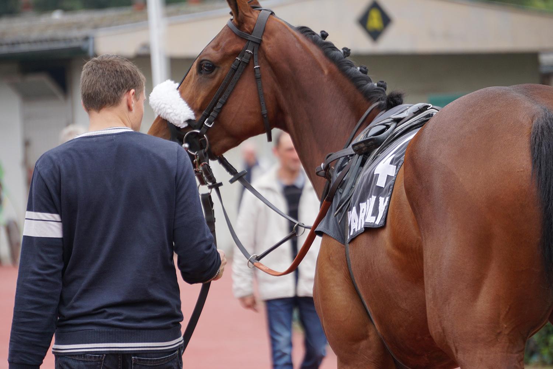 cheval de course au galop, photographie prise par Horse Development
