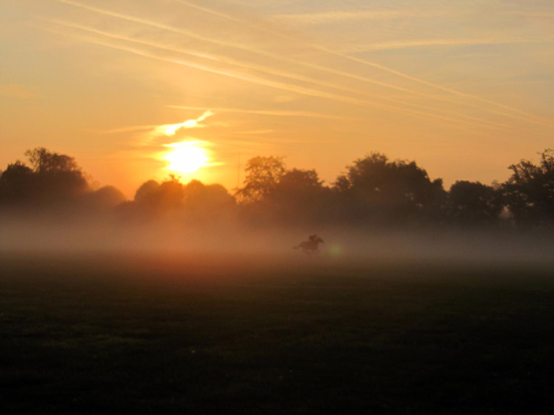 Photographie prise par Horse Development lors d'un entraînement de Galop, au petit matin à Chantilly, au centre d'entraînement de galopeurs