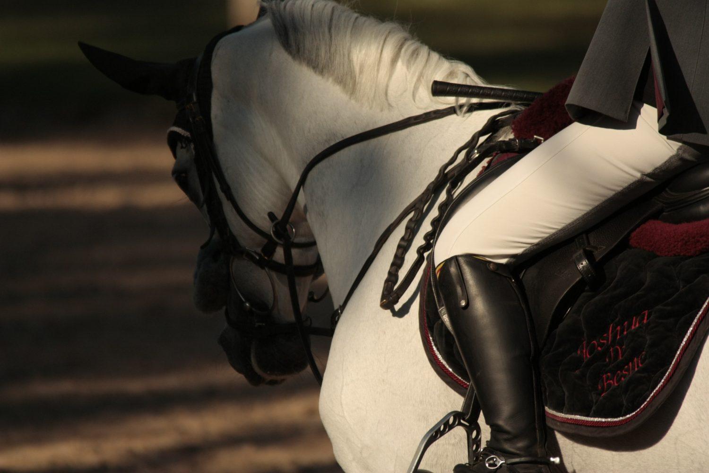 photographie par Horse Development d'un cheval gris en concours de saut d'obstacles