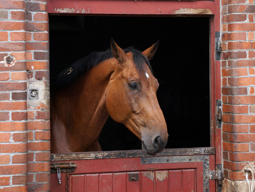Photographie prise par Horse Development, cheval à la porte de son box. Vous avez une idée révolutionnaire dans le monde du cheval, vous souhaite tester un produit, un service, une nouveauté, nous pouvons vous aider à tester cette idée